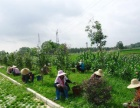 室内花卉租赁,绿植租赁,工厂绿化,庭院绿化,园林工
