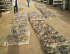 改良育肥型种兔投资基地喜欢出售质优价廉引种多少钱一组