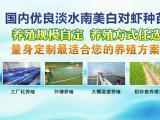 沈阳南美对虾苗室内淡水养殖培训 欢迎来电咨询