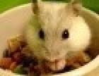 焦作灭鼠公司