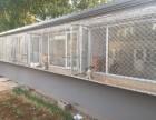 京广桥 长期有偿寄养 单独房间散养养老宠物 托管 接送寄养