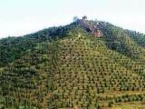 北京延慶500畝旅游景區尋求合作