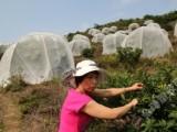 果木蔬菜防虫网预防黄龙病隔离害虫传播降低农药使用