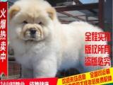 出售狗场繁殖纯种博美幼犬 公母都有 健康质保