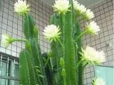 白下辦公室綠植租賃,花卉租賃