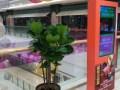 泉州晋江万达公司花卉出租盆栽租赁花卉租摆租花