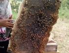 自养纯正蜂蜜