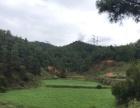 富民 散旦 过洞 土地 230亩有水源林地耕地土地