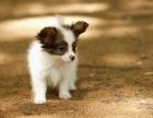 成都狗狗死了怎么处理 宠物善后 宠物殡葬服务