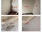 专业墙纸除霉,墙体除霉,家具除霉,效果好,服务优