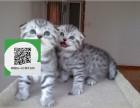 杭州哪里卖折耳猫 杭州哪里有宠物店 杭州哪里卖宠物猫便宜