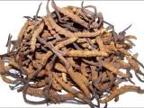 宝安回收冬虫夏草价格上的一定涨幅