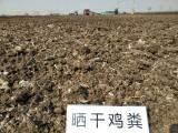 广东潮州厂家批发优质干鸡粪自然晾晒干鸡粪天然干鸡粪块