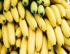 香蕉原粉 香蕉原粉诚邀加盟