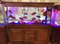 无锡家用风水鱼缸价格,无锡酒店鱼缸价格, 无锡定做鱼缸价格