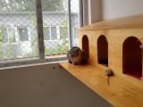 小关宠物寄养单独长期提供宠物散养接送宠物上门