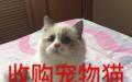 收无病无癣全品种宠物猫