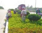 专业绿化养护 专业绿化工程 浦东绿化公司 上海绿化公司