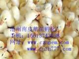沧州鹅苗,山东鹅苗价格,北京鹅苗