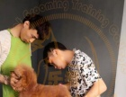 学什么技术有前途,做宠物美容师,宠物店店长