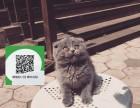 东莞在哪里卖健康纯种宠物猫 东莞哪里出售蓝猫