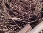 河口高价回收废紫铜线废电缆