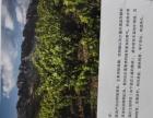 尤尼奥葡萄酒加盟 名酒 投资金额 1万元以下