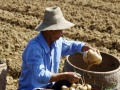 武汉周边适合农家乐的地方武汉开心果园周边采摘地瓜
