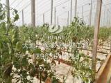 潍坊智能温室建设 潍坊温室大棚厂家