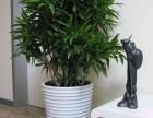 成都郫县办公绿植 鲜花租赁销售,绿植墙,私家花园搭建