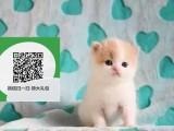 烟台哪里有虎斑猫出售 烟台虎斑猫价格 烟台宠物狗出售信息
