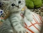 想领养一只小猫