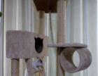 商丘高档猫咪寄养,二十四小时服务,新年开始预定