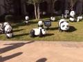 人气乐趣多多熊猫出租熊猫模型出租啦