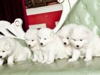 厦门官方认证宠物领养中心 多品种狗狗赠送