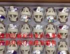 安庆专业投影仪灯泡批发 零售 价格你想象不到的便宜