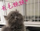 湖南株洲的猫咪找新家