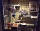 出售一个木制龙猫笼子设备齐全