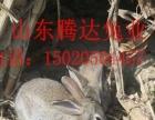 花巨兔饲养花巨兔的方法
