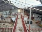 门楼 仉村 养猪舍 800平米