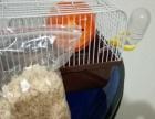 仓鼠用品,篮子加食物等