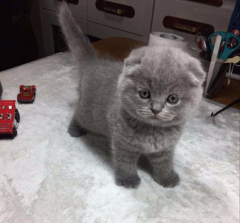 各种宠物猫,品相漂亮,健康保证,可挑选
