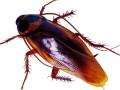 灭蟑螂杀虫四害防治,彻底解决四害烦恼