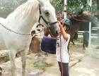 马术培训马匹寄养