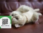 天津哪里有加菲猫出售 天津加菲猫价格 天津宠物猫转让出售