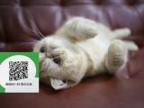 徐州哪里有加菲猫出售 徐州加菲猫价格 徐州宠物猫转让出售