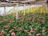 出售各种花,盆景,自己家种植,价格优惠,欢迎订购