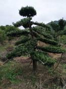 萍乡优质的江西生态农业种子提供商 江西生态农业平台厂家批发